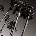 Venice Beach Palms by Neil Messenger