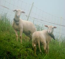 Swiss Sheep with Big Bells by nadinecreates