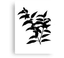 andromeda acuminata Brush Canvas Print
