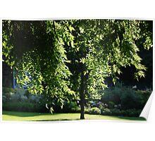Leaves of light Poster