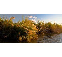 Sunset Reeds Photographic Print