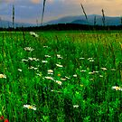ADIRONDACK WILDFLOWERS by MIKESANDY