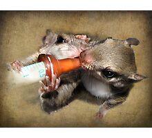 Feeding Flyers Photographic Print