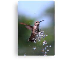 Bathing Kolibri Canvas Print