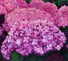 Hydrangeas by ChrisJeffrey