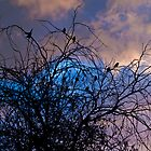Birds on the branches by KellieJayne