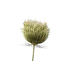 Wild flora XI 5459 Photographic Print