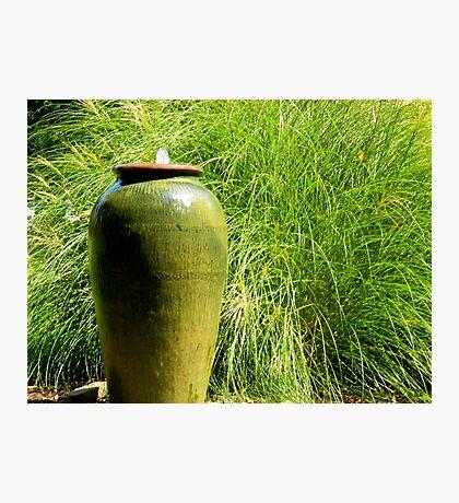 Green Garden  ^ Photographic Print