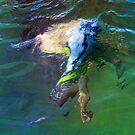 waterbaby by carol brandt