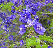 I'm Blue da ba de da ba da... by ScarletSass