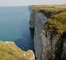 Bempton Cliffs, a long shot. by dougie1page2