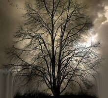 1039 by peter holme III
