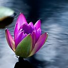 Silken Shimmer by John Griggs