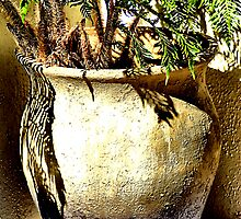Potted Fern by Bob Wall