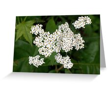 What about White 5 Greeting Card