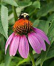 Busy Bee by Sandy Keeton
