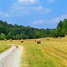 Hay Baling time in Arkansas by Susan Blevins