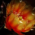 Cactus Flower by Stormygirl