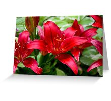 Winter Park Lilies  Greeting Card