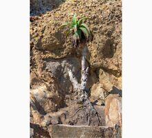 Succulent Growing Thru Rocks Unisex T-Shirt