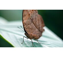 Leaf Butterfly  Photographic Print