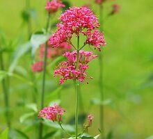 Pretty lil flowers by Debbie Roelle