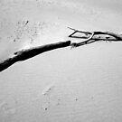 Mekong River Sticks by Betsy  Seeton