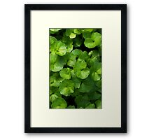 Faux lily pads Framed Print