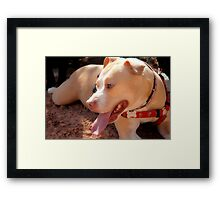Rest Time Framed Print