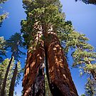 Two Trees by Mark Ramstead