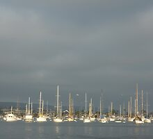 Stormy Sails- Newport Beach, CA by Alima  Ravenscroft