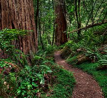 Redwood National Park - Tall Tree Grove Trail by Joe Thill