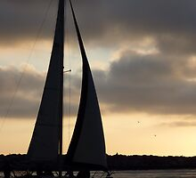 Sunset Sails- Newport Beach, CA by Alima  Ravenscroft