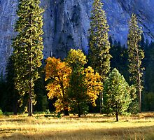 """Fall In Yosemite Valley"" by Lynn Bawden"