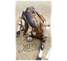Love Goat Poster