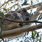 Australia by Judy Woodman
