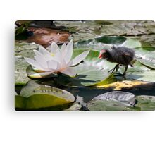 Tales from the Lily Pond Canvas Print