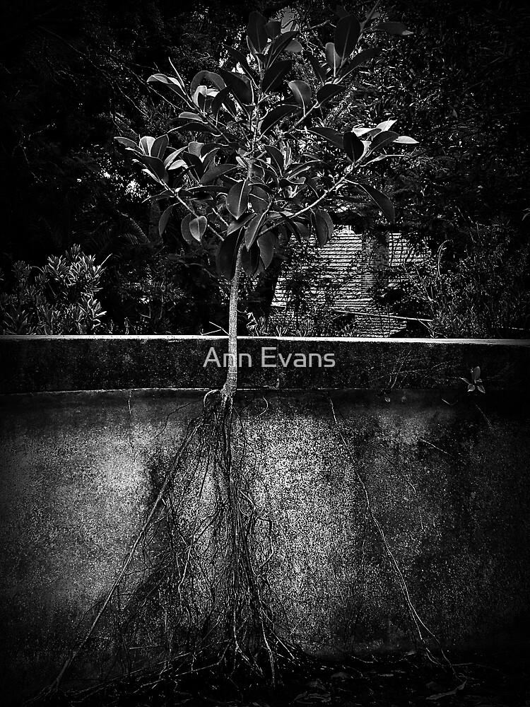 In Too Deep by Ann Evans