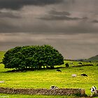 Cows, Trees & Walls by Aggpup