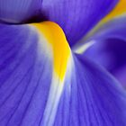Blue Iris Abstract by AnnieD