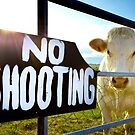 Save the Cows by Philip Cozzolino