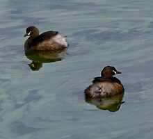 Two Grebes in a Green Sea by Hedoff
