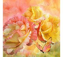 Rose - Colors Of Spring SQ Photographic Print