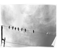 b&w birds on a wire Poster