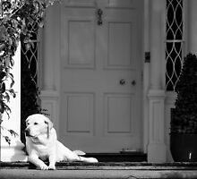 Home Sweet Home - Black and White Series by Paulette1021