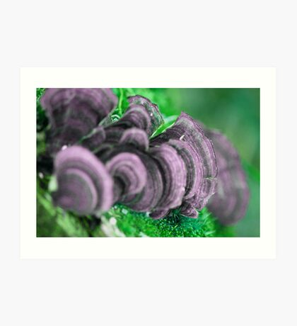 Mushrooms in Spring Art Print