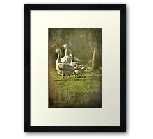 A Wild Goose Chase Framed Print