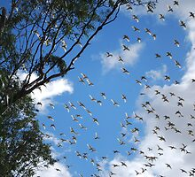 Corellas in Flight by Lozzar Landscape
