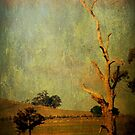 The dead tree ... by Chris Armytage™