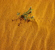 Tracks of life by Peter Doré